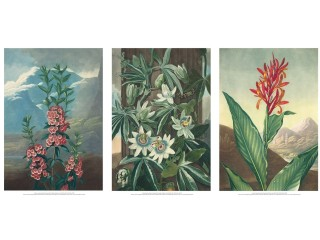 Greeting Cards, Calendars and Prints created using images from the Turnbull Library