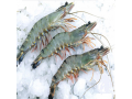 vietnam-seafood-supplies-sourcing-of-vietnamese-seafood-small-1