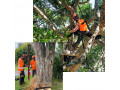 tree-care-auckland-small-1