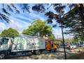 tree-care-auckland-small-2