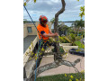 tree-care-auckland-small-0