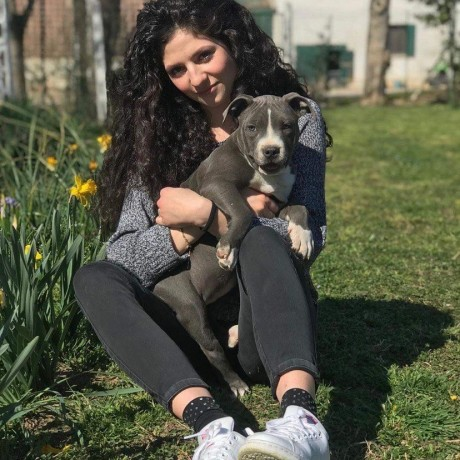 outstanding-pitbull-puppies-for-new-homes-big-2