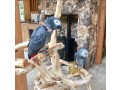 african-grey-parrot-brilliant-talker-inc-cage-small-3